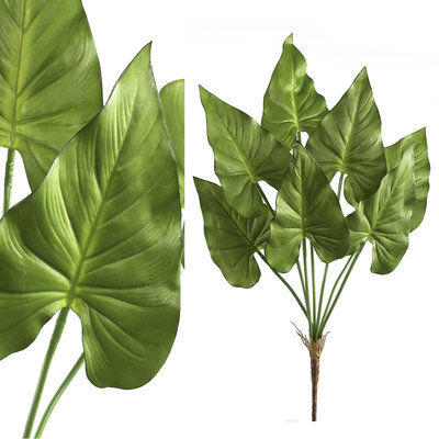 PTMD Leaves Plant Caladium
