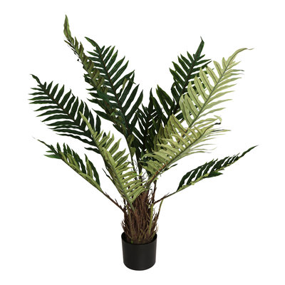 PTMD Tree Kwai Palm Groen