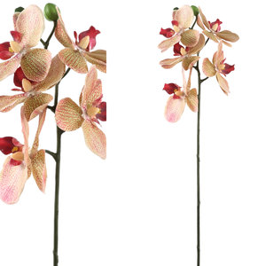 PTMD Orchidee Oranje/Roze mini