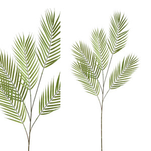 PTMD ' Palmbladeren Groen'