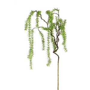 PTMD ' Leaves Plant groene waterplant tak '