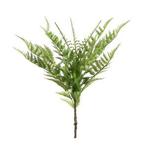 PTMD ' Fern Plant groene varen bos '