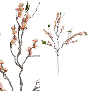 PTMD '  Blossom bloem Roze pruimenbloesem tak '